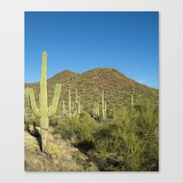 Carol M Highsmith - Saguaro Cactus near Tucson, Arizona Canvas Print