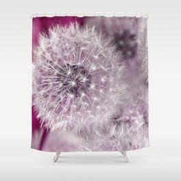 Dandelion pink Shower Curtain