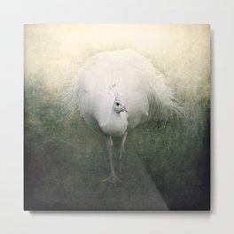 White Peacock Metal Print
