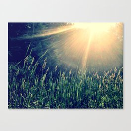 Late July Canvas Print