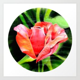 Color Rose Art Print