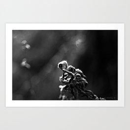 Dead Frost Art Print
