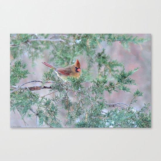 Pretty Female Cardinal Canvas Print
