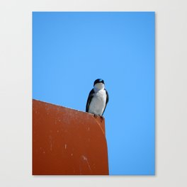 Swallow & Sky Canvas Print