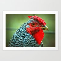 rooster Art Prints featuring Rooster by Nichole B.