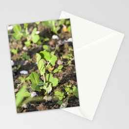 young green peas Stationery Cards