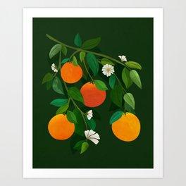Oranges and Blossoms / Botanical Illustration Art Print