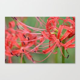 Hurricane Blooms Canvas Print