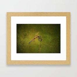 4-Spotted Skimmer Dragonfly Framed Art Print