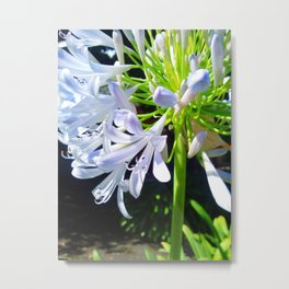 Lily Of The Nile 2013-09-20 11.19.51. Metal Print