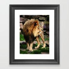 Male Lion Framed Art Print