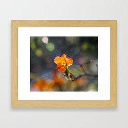 Tiny Orange Bokeh Delight Framed Art Print