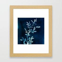 Blue gazes from the cat windows Framed Art Print