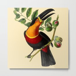 Toucan and Butterfly Tropical Fruit and Floral portrait painting Metal Print