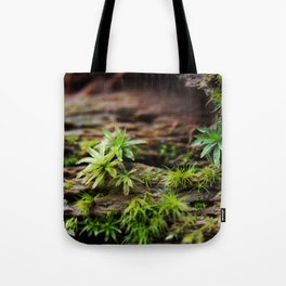 Moss on a Decaying Log Tote Bag