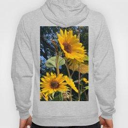 Sunflowers Facing the Sun Digital Photography Hoody