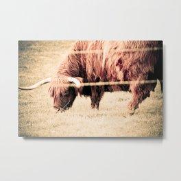 Highland Bull Metal Print