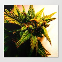 plant Canvas Prints featuring Plant by Chronic Cookie