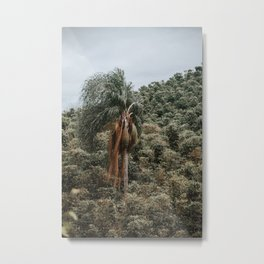 Coffea - Palm Tree Metal Print