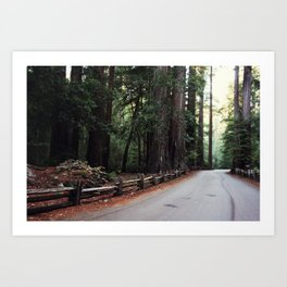big basin Art Print
