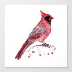 Red Cradinal Canvas Print