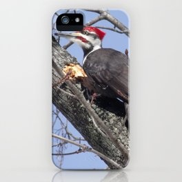 Pileated Woodpecker iPhone Case