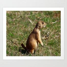 Black-tailed Prairie Dog Pose Art Print
