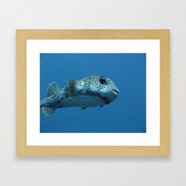 Pufferfish Framed Art Print