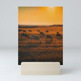 Sunset Sheep Mini Art Print