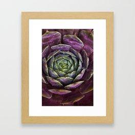 Sempervivum Heuffelii Framed Art Print