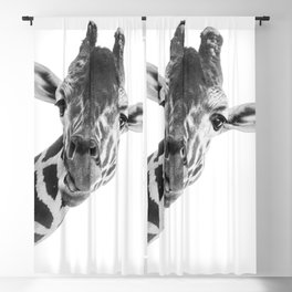 Silly Giraffe B&W // Wild Animal Portrait Cute Zoo Safari Madagascar Wildlife Nursery Ideas Decor Blackout Curtain