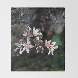 White stonecrop - Sedum Throw Blanket