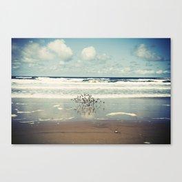 flock (oregon coast) Canvas Print