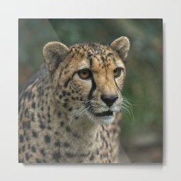 Cheetah's Face Metal Print
