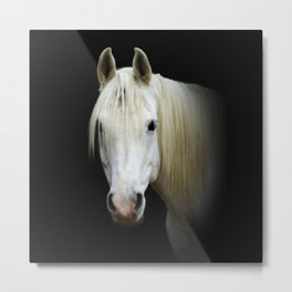 The white Arabian  Metal Print