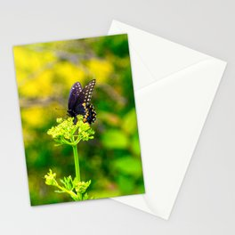 Spicebush Swallowtail Butterfly Stationery Cards