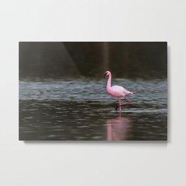 Lesser Flamingo In A Solar Spotlight Metal Print