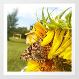 SunFlower Fly Art Print