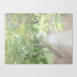 Pathway to the secret garden Canvas Print