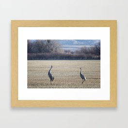 The Call of the Sandhill Cranes Framed Art Print