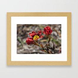 Sparaxis Framed Art Print