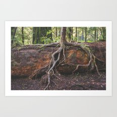 Jedediah Smith State Park - Forest Tree Art Print