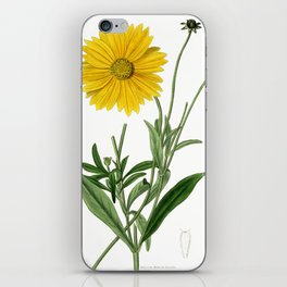 Spear-Leaved Coreopsis / Curtis 1857 iPhone Skin