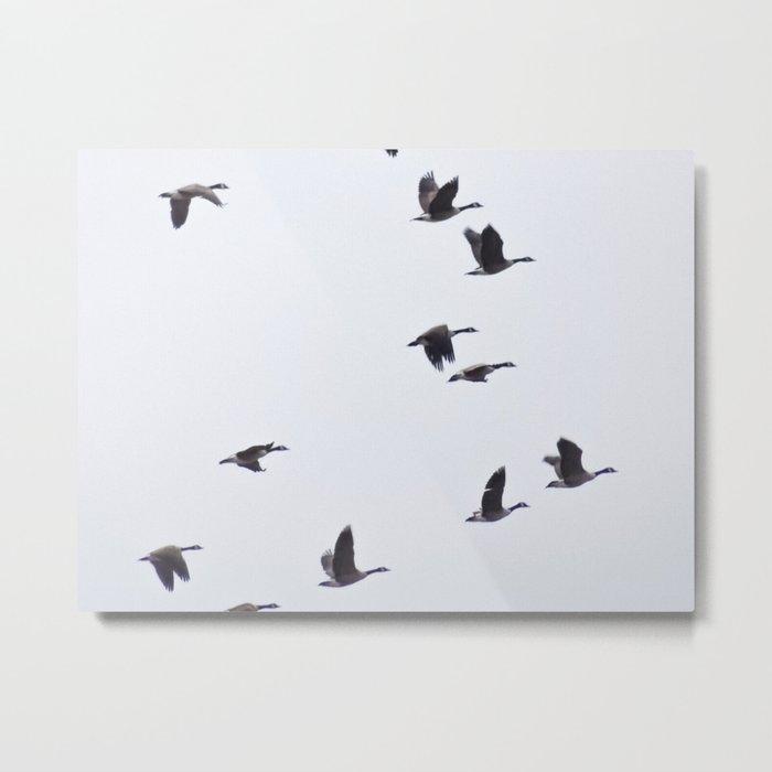 Birds -Scandinavian Minimalist Art Metal Print
