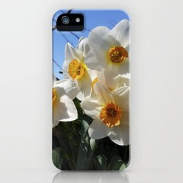 Sunny Faces of Spring - Gold and White Narcissus Flowers iPhone Case