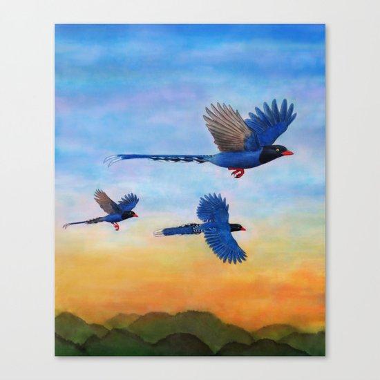 Taiwan Blue Magpies (2) Canvas Print