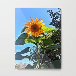 Southern Maine Sunflower Metal Print