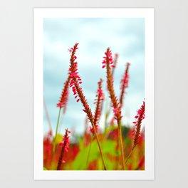 Vibrant Pink Wild Flowers Art Print