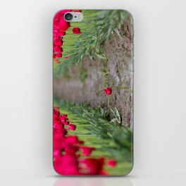 A Field of Red Tulips iPhone Skin
