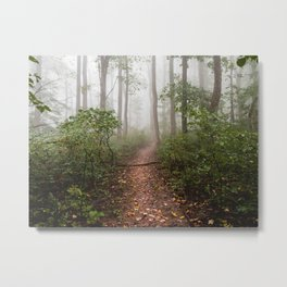 Smoky Mountain Forest Adventure III - National Park Nature Photography Metal Print